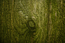 Background Of Old Dirty Wooden Texture With Green Moss.