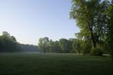 polana las poranek mgła zielono