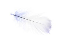 Feather Texture. Nature Abstract Bird Feather Closeup Isolated On White Background In Macro Photography. Glamorous Sophisticated Airy Artistic Image On Soft Blurred Background.