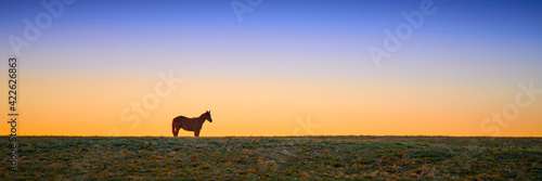 Thoroughbred horse grazing at early dawn in a field. Fotobehang
