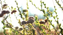 Bright Green Bush On A Sunset Background. The Wind Sways The Branches Of The