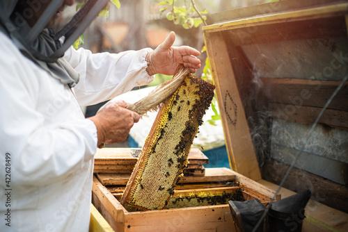 Canvastavla Beekeeper obtaining honey, raising the wax honey from the hive