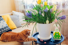 Easter Decoration. Cat Playing With Eggs By Spring Flowers In Pot At Home. Pet Having Fun On Table. Holiday Interior
