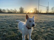 Puppy Playning In A Frosty Morning At Sunrise In A Foggy Day Orange Tinge Fog. Beautiful Misty Sunrise Landscape. Foggy Morning With Trees In English Town