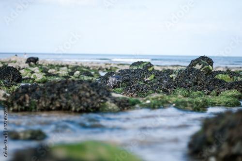Rochers et algues à marée basse Fototapeta