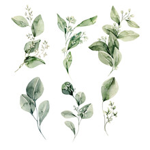 Watercolor Floral Set. Hand Painted Illustration Of Forest Herbs, Greenery. Green Leaves Isolated On White Background. Botanical Illustration For Design, Print Or Background