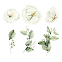 Watercolor Floral Set. Hand Painted Illustration Of Forest Herbs, Greenery, White Flowers. Green Leaves Isolated On White Background. Botanical Illustration For Design, Print Or Background