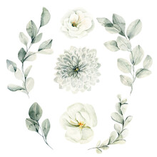 Watercolor Floral Set. Hand Painted Illustration Of Forest Herbs, Greenery, White Flowers. Green Leaves Isolated On White Background. Botanical Illustration For Design, Print