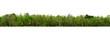 Leinwandbild Motiv group green tree isolate on white background