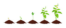Stages Of Plant Growth In The Soil
