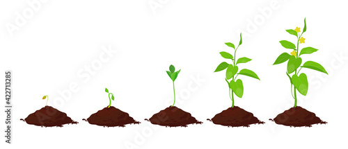 Fotografie, Obraz Stages of plant growth in the soil