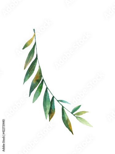 tropical creeper leaf on white background, cute watercolor baby illustration Fotobehang
