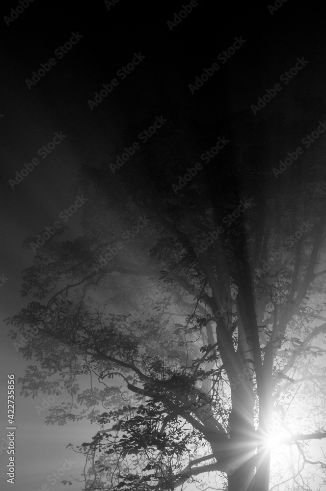Fototapeta Promienie światła przechodzące przez drzewo