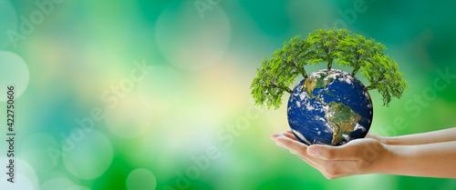 Fototapeta Growing tree on Planet Earth in hand