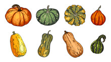 Pumpkins, Butternut Squash And Gourd. Thanksgiving Pictogram Collection Farm Harvest, Closeup Squash, Vegetable.