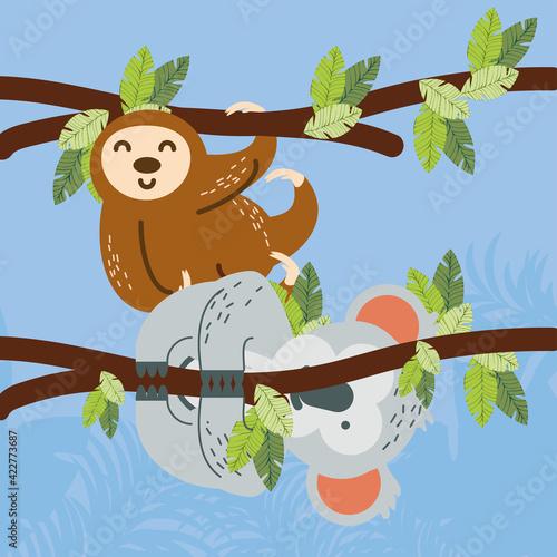 Fototapeta premium koala sloth foliage