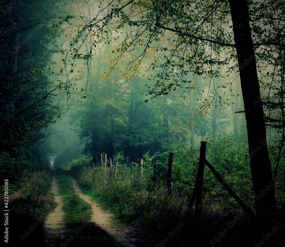 Fototapeta Mglisty leśny poranek