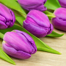 Purple Tulips Against Wooden Background