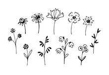 Simple Vector Freehand Black Outline Set. Delicate Flowers, Twigs, Leaves, Bouquets, Field Grass In A Rustic Style On A White Background. Elements Of Nature, Plants For Decoration.