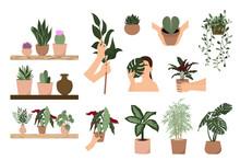 House Plants Vector Illustration Set. Indoor Plants Clipart, Plant Lady, Cactus, Monstera, Succulent, Begonia, Ficus