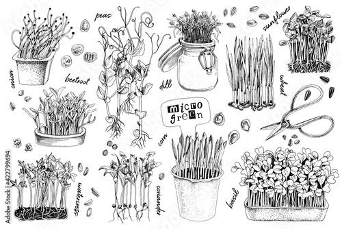 Obraz Hand drawn micro green elements set - fototapety do salonu
