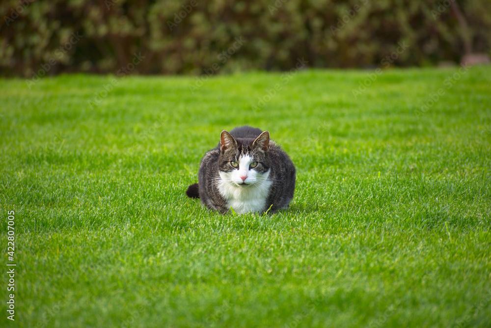 Fototapeta kot na trawie