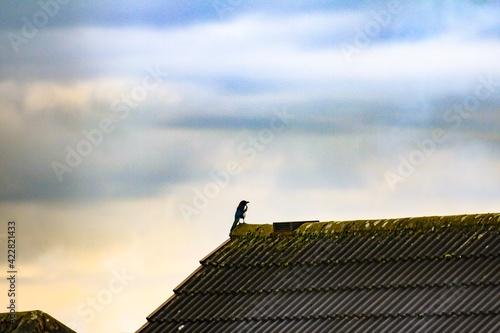 Fotografia, Obraz roof, sky, house, blue, architecture, chimney, building, red, home, tile, constr