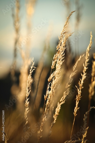 Obraz Golden colored leaves on reed or plant, vertical - fototapety do salonu