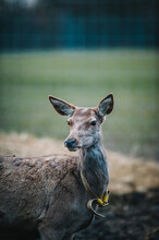 Vertical Shot Of White-tailed Deer Standing On The Field
