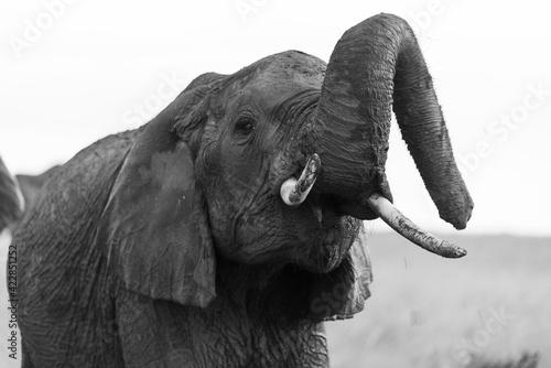 Photo Closeup portrait of an African elephant