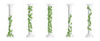 Marble greek columns with green ivy creeper isolated on white background. Stone pillars with climbing hedera vine. Realistic 3d vector illustration of crept plants on roman architecture design element