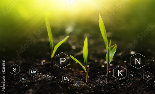 Fototapeta Plants on  sunny background with digital mineral nutrients icon. Fertilization and the role of nutrients in plant life.  obraz
