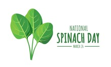 National Spinach Day Vector Illustration, With Fresh Spinach Leaves As A Banner, Poster Or Template.