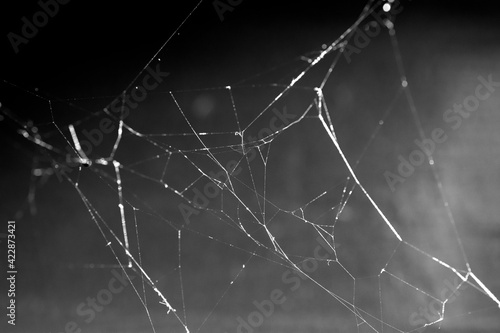 Papel de parede black and white photo of a spider web on the wall