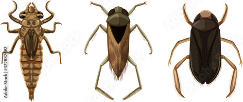 Set of different types of bugs and beetles Fototapet