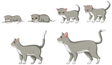 Cat Growth Stage On White Background