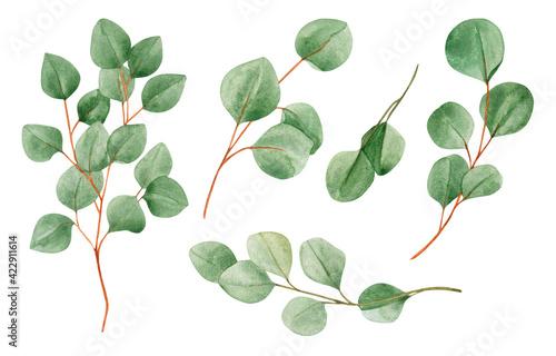 Fotografia Watercolor botanical illustration set - eucalyptus green branches collection