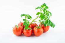 Freshly Picked Tomatoes On White Background