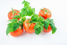 Freshly Picked Tomatoes On White Background