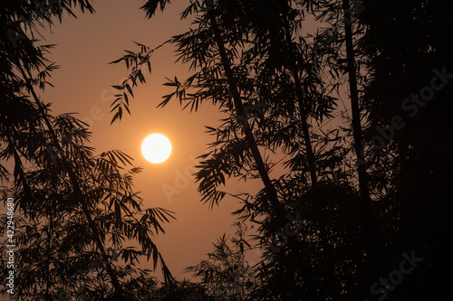 Papel de parede orange morning sunshine behind silhouette bamboos