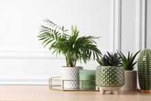 Beautiful Chamaedorea, Aloe And Haworthia In Pots With Decor On Wooden Table, Space For Text. Different House Plants