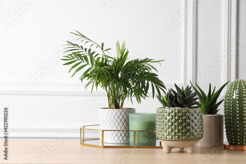 Beautiful Chamaedorea, Aloe and Haworthia in pots with decor on wooden table, space for text Wallpaper Mural