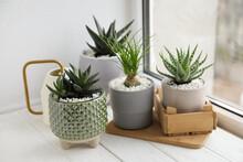 Beautiful Aloe, Nolina And Haworthia In Pots On White Wooden Windowsill. Different House Plants