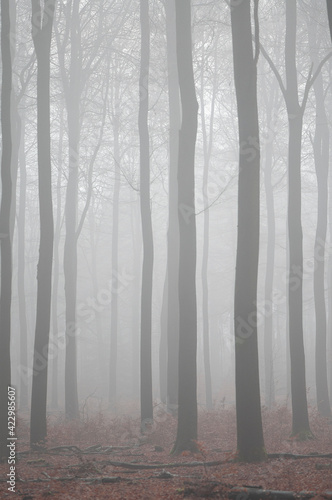 Forest with trees in a misty forest in a vertical image