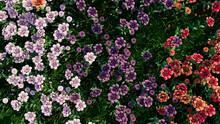 Multicolored Flower Background. Floral Wallpaper With Violet, Purple And Orange Roses. 3D Render