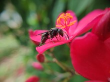 The Process Of Pollinating The Pistil Of A Flower By A Wasp