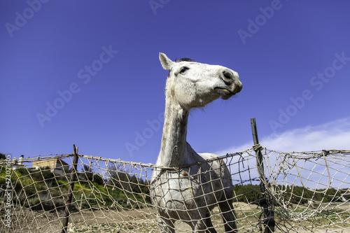 Horse in stable Fototapet