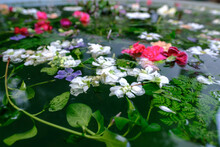 Detail Of Purple Vinca Minor And Some Flowers On A Pool With Bokeh Effect In Winter Time