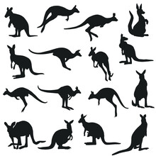 Kangaroo Silhouette Animal Illustration. Vector Icons Famous Animals In Australia.