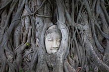 Ancient Buddha Head Embedded In Roots Of Old Banyan Tree Growing On Territory Of Wat Mahathat Temple In Ayutthaya